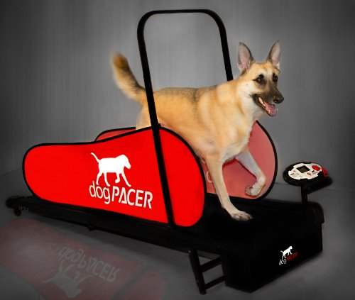 dogPACER LF 3.1 Full Size Dog Pacer Treadmill, Black and Red, Model Number: 91641
