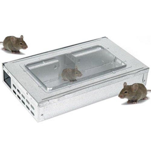 Multi combattete il Pest in trappola per topi - Live cattura fino a 10 topi