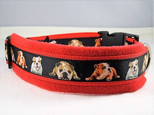 Halsband Englische Bulldogge 50-55 cm Halsumfang