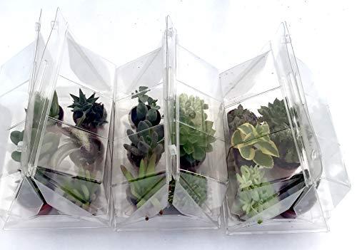Piante grasse Mignon in vaso cm. 3,5 N. 18 Confezionate in tre serrette da N. 6 piante cadauna.