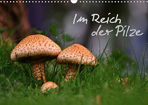 Im Reich der Pilze (Wandkalender 2021 DIN A3 quer)