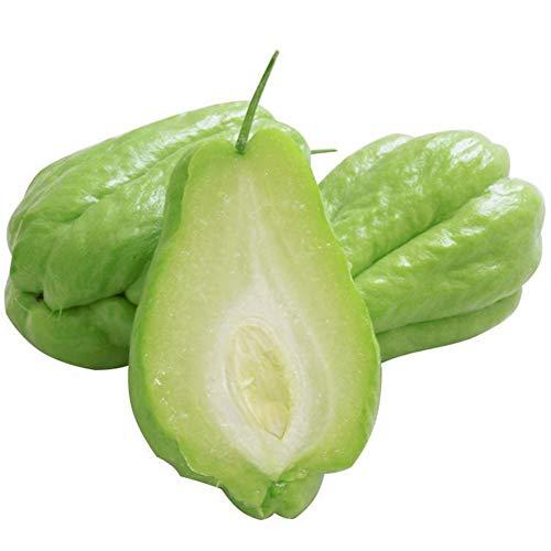 lamta1k Chayote-Samen, 20 Stück Köstliche Chayote-Bonsai-Samen, nahrhafte Gemüsegarten-Gartenpflanze Chayote Seeds