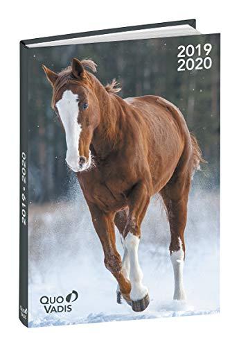 Quo Vadis–Agenda escolar (mes Potes con trabillas–Visual de caballo–septiembre 2017A agosto 2018–12x 17cm
