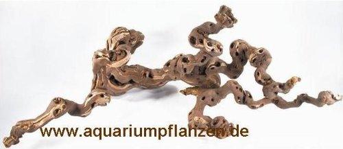 Mühlan Pflanzenhandel Weinrebe 30-40 cm für Terrarium, Wurzel Terrarium