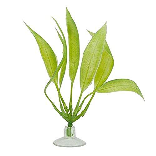 Marina Betta Amazon épée Plante avec Ventouse, 12,7 cm, Vert
