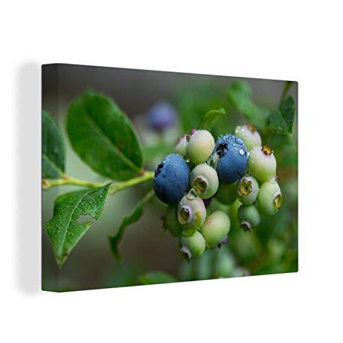 Canvas Schilderijen - Regen op een blauwe bessenstruik - 150x100 cm - Wanddecoratie - canvas met 2cm dik frame