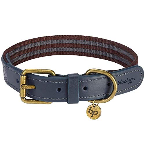 6. Blueberry Pet Strip Leather Dog Collar