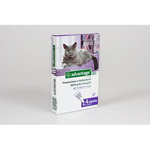 Bayer Advantage Spot On 80 GATTO + CONIGLIO (4 pipette per pulci) 4 x 0,8 ml