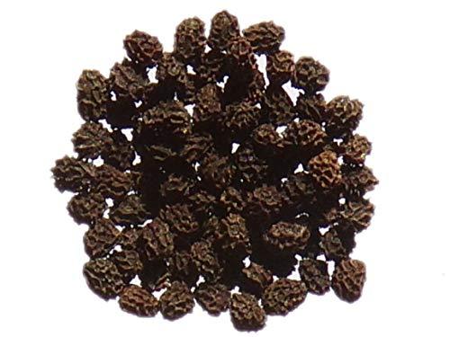 Muflier Grand Varié (Gueule de Loup) - 0,20 grammes - Antirrhinum Majus - Common Snapdragon - SEM14