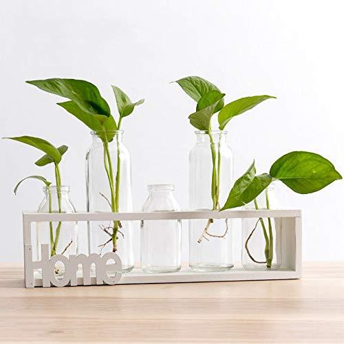 SUNRUNERS Pots de Verre à l'intérieur avec Bouteille lumières hydroponie Plante Support en Bois pour Home Office Décor Bois Brut 5 Terrarium