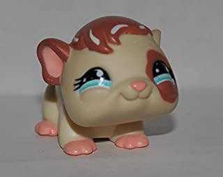 Guinea Pig #683 (Cream, Brown Hair and Eyepatch, Blue Eyes) Littlest Pet Shop (Retired) Collector Toy - LPS Collectible Replacement Single Figure - Loose (OOP Out of Package & Print)