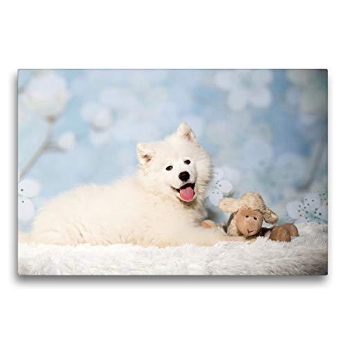 Premium Textil-Leinwand 75 x 50 cm Quer-Format Junger Samojede lacht in die Kamera | Wandbild, HD-Bild auf Keilrahmen, Fertigbild auf hochwertigem Vlies, Leinwanddruck von www.annettmirsberger.de
