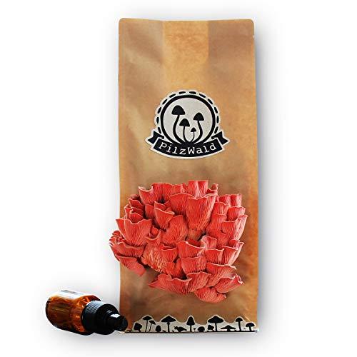 PilzWald PilzBox - Rosenseitling - Rosa Austernpilze züchten - Pilzzucht-Set für Anfänger inkl. Sprühflasche & Bilder-Anleitung - Pilz-Gemüsegarten