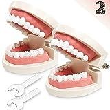 Dental Teeth Model, 2 Pack Adult Standard Typodont Demonstration Denture Model for Dental Teaching, Study, Clean Display for Kids, Education, Patient, No Wisdom Teeth