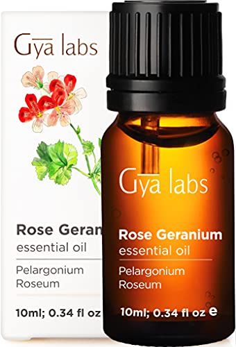 Gya Labs Rose Geranium Essential Oil for Skin Care, Stress Relief and Relaxation - Topical for Dry Skin, Uneven Skin, Protect Pets - 100 Pure Therapeutic Grade Rose Geranium Oil for Aromatherapy-10ml