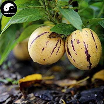 VISTARIC Comprar semillas de melón berenjena de frutas 30pcs planta de ginseng fruta Solanum Muricatum Aiton