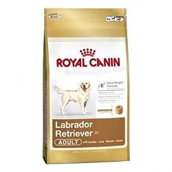RC Labrador Retriever