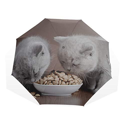 Regenschirm Sonnenschutz Hauskatze frisst Futter in Schüssel 3-Fach Kunstschirme (Außendruck Sonnenschirm Kompakter winddichter Klappschirm Regen Sonnenschirm