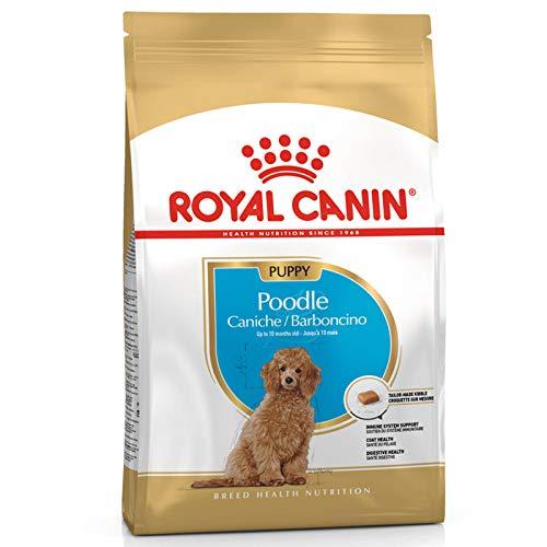 ROYAL CANIN Pudel Junior 3 kg, 1er Pack (1 x 3 kg)