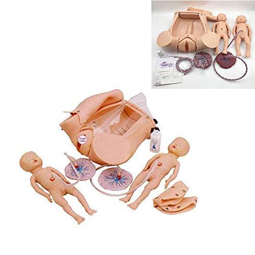 Modelo de Pelvis Femenina Parto, Simulador de Parto, Modelo de Entrenamiento de Partería con Modelos de Bebé, Útero, Saco Amniótico, Pelvis y Placenta/Umbilical para la Enseñanza de Ginecologí
