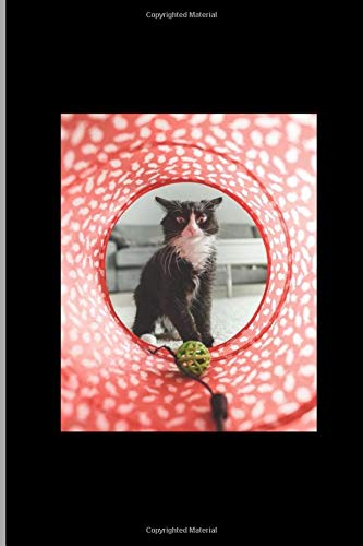 Weird Cat With Toy Gift Pet Lovers: Animals Feline Pussycat Playing Kitten...