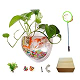Creative Acrylic Hanging Wall Mounted Fish Tank, Hanging Bowl For Water Plants, Hydroponic Air Plant Flower Pot, Mini Aquarium Planter, Home Decor, Fake Plants Nail Stone Etc.