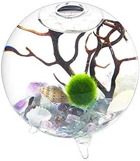 newdreamworld蛍石Auqariumキット–9cm Footedガラスの花瓶12mm Marimoボールチップgravelsシェルと固有のブラックファンコーラル誕生日プレゼントホームインテリア
