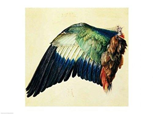 The Poster Corp Albrecht Durer – Flügel einer blauen Rolle Kunstdruck (60,96 x 45,72 cm)