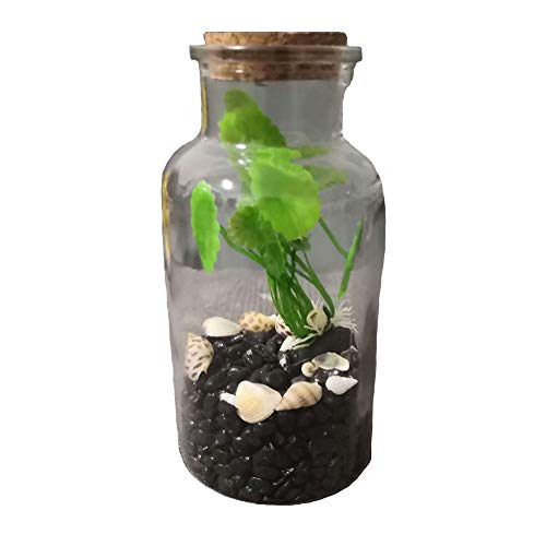 WLCY Ecosphere, Ecosystem Aquarium Kit, Globe Glass Jar Creative Micro Landscape Eco Bottle Fish Tank with Led Aquarium Pebbles Seashells Decor Unique Birthday Presents (Botella Grande de Boca Ancha)