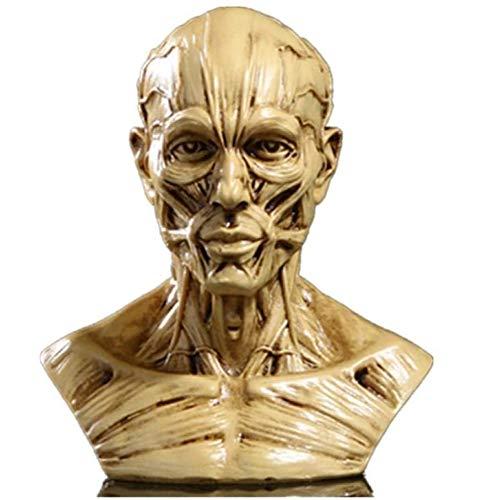 ZHIRCEKE Skulptur Figur Statue Skulptur Kopf Muskel Menschliches Statue Kunstgemälde Dekoration Büste