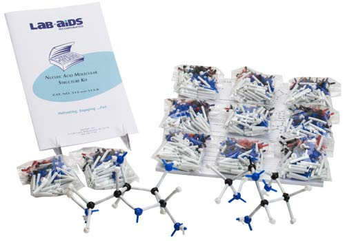 Lab-Aids Nucleic Acid Molecular Structure (Introduction to RNA and DNA) Kit 513