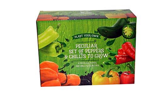 A to Z 82002 - Set di peperoni e peperoncini da coltivare, 8 x 20 x 15 cm, multicolore