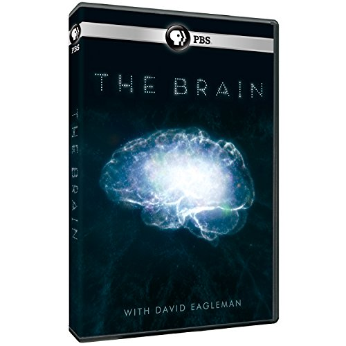 Brain With David Eagleman [DVD] [Import]