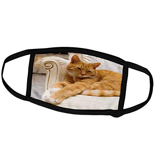 3dRose Face Mask Medium, Happy orange tabby cat relaxing on fancy armchair