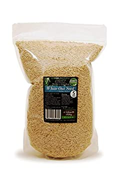 oat seeds for planting
