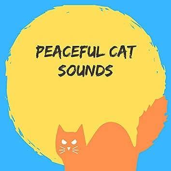 Peaceful Cat Sounds