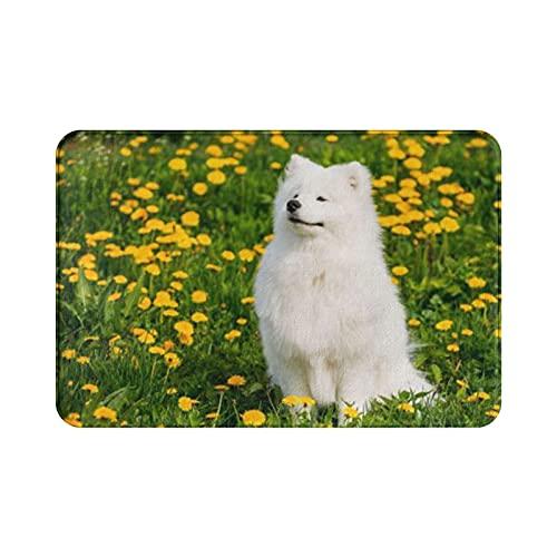 Bathroom Arpet 40,6 x 60,9 cm, tapete de banheiro elegante, piso fofo, capacho grosso e macio.- Cachorro branco sorrindo divertido e jovem, sentar-se ao ar livre em prado verde