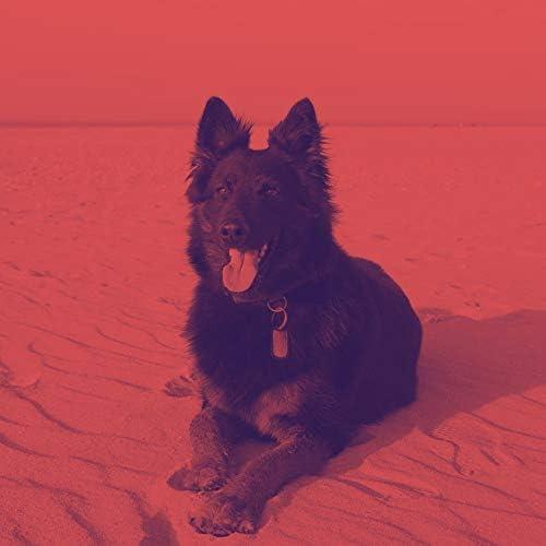 Dog Music 無線