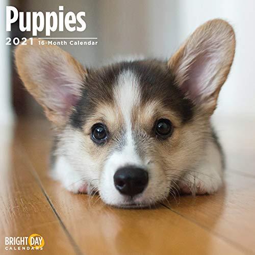 Bright Day Calendars 2021子犬の壁カレンダー、明るい日、12 x 12インチ、かわいい犬の子犬