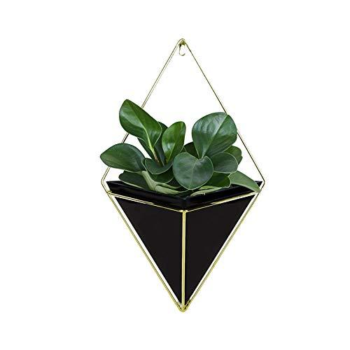 TankMR vetplanten voor binnen en buiten, cactusplanten, kruiden of aloë mini, decoratief, voor op tafel op kantoor, thuis, verjaardagscadeau SNone 3