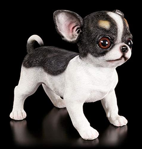 Gartenfigur Hund - Chihuahua Welpe | Deko Garten Figur Skulptur