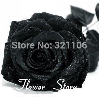 Livraison gratuite, 200 Black Rose Seeds - Tige longue, couleur rare, bricolage jardin en pot, Balcon & Jardin des plantes Fleur