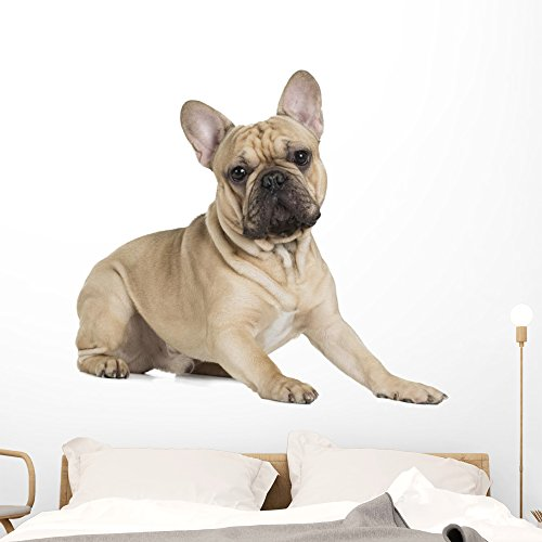 Wallmonkeys French Bulldog Fawn Color Wall Decal Peel and Stick Graphic (48 in W x 43 in H) WM359461