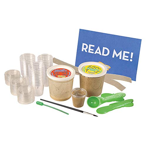 Insect Lore Deluxe School Kit Refill with 33 Live Caterpillars