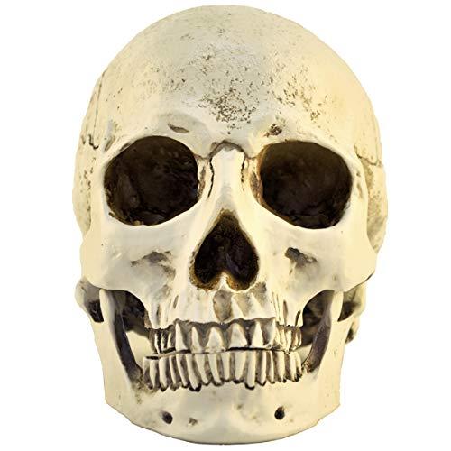 ENNAS 1:1 Harz Schädel Kopf Modell Simulation Skelett Kopf medizinische Schädel Kunst Kopie für Halloween Dekor