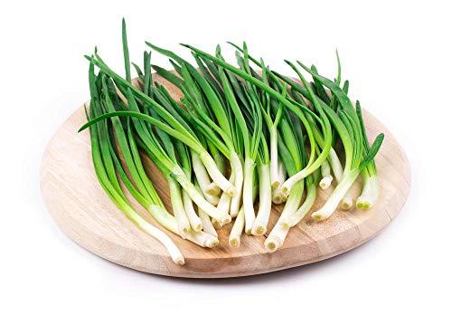 Semi di erba cipollina cinese 1000Pcs Semi di ortaggi vegetali di cipolla verde delizioso giardino da giardino