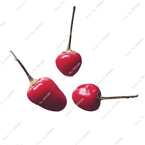 Cerise poivre Graines de légumes jardin Bonsai Chili usine Décoration non-Ogm Jardin Cuisine Assaisonnement Alimentation 200 Pcs 17