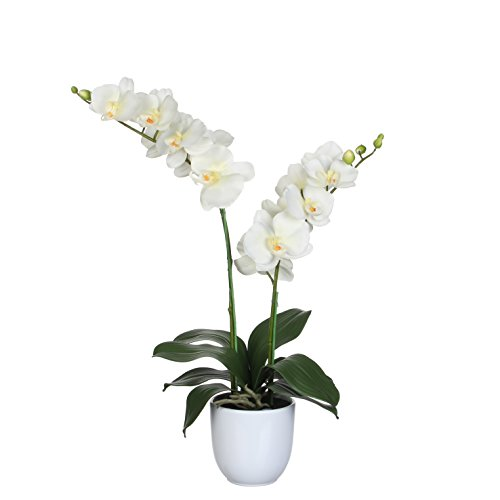 MICA Decorations Phalaenopsis en Pot, Polyester, Polyester, Ivoire, 38 x 38 x 66 cm
