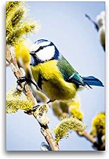 CALVENDO Lienzo Premium de 30 cm x 45 cm de Alto, una pequeña Viva Flor de Hierro en un árbol de Sauce, Imagen en Bastidor, Imagen premontada (Cyanistes caeruleus) Animales, Animales