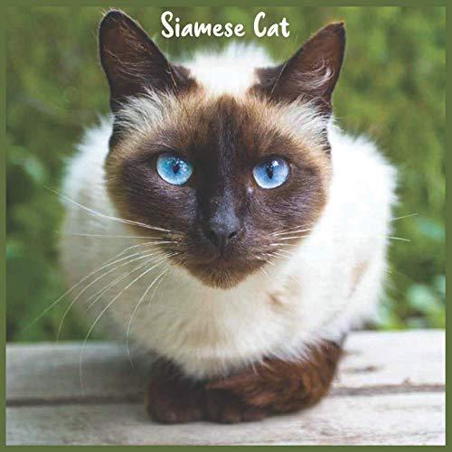 Siamese Cat: Official Siamese Cat Calendar 2021, 18 Months